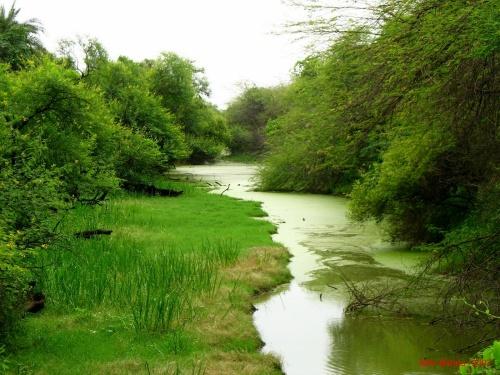 Marsh_ Bharatpur