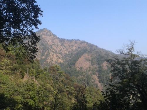 Woods_near Rishikesh
