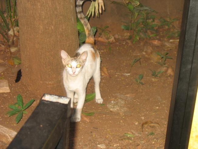 26_ Feline visitor