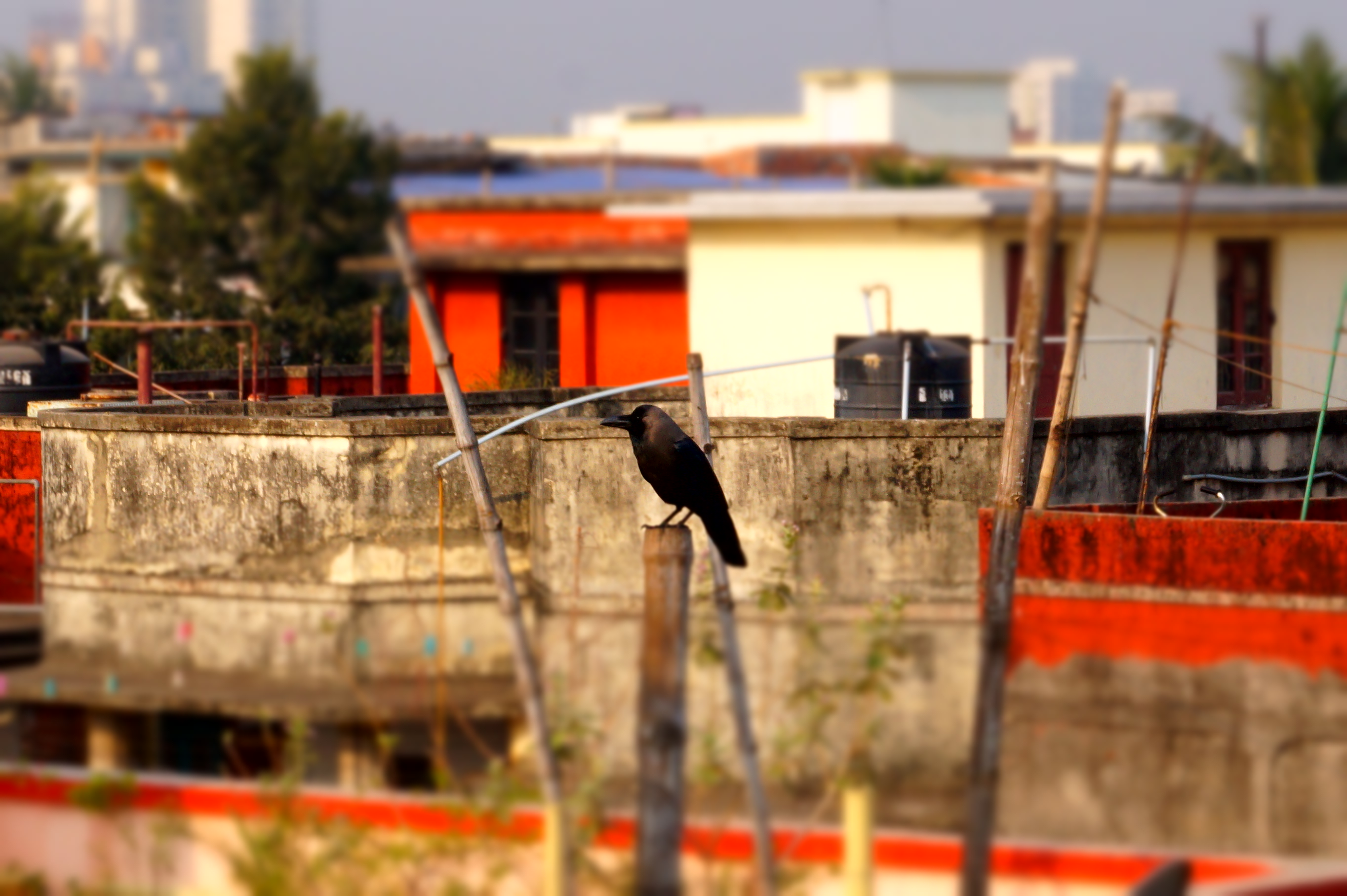 The crowings of Monsieur Crow – World beneath the feet