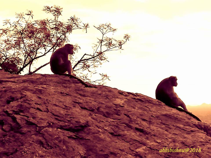 Monkeys in meditation copy